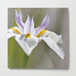 White Iris, close up - Botanical Photography Metal Print