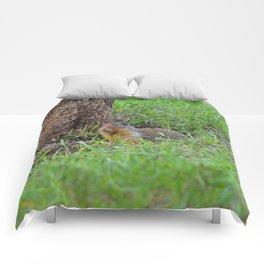 Columbian ground squirrel in Jasper National Park Comforters