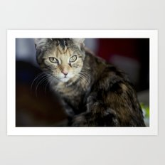 Dolce the Cat Art Print