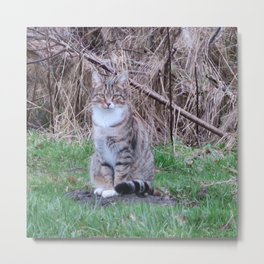 a female gray house cat sitting on the lawn Metal Print