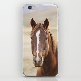 Colorful Western Horse Photo iPhone Skin