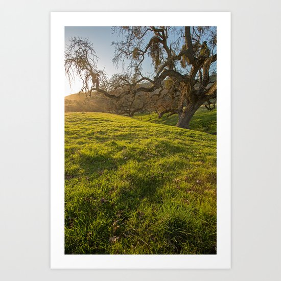 Golden Oak Art Print