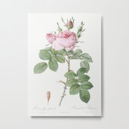 Rosa bifera officinalis, also known as Rose of Perfume from Les Roses (1817–1824) by Pierre-Joseph R Metal Print