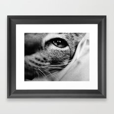 uschi the cat Framed Art Print