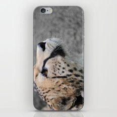 Cheetah 1 iPhone & iPod Skin