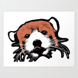 Ailurus Fulgens (The Red Panda) Art Print