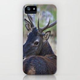 Cervo Sardo iPhone Case