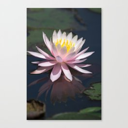 Aquatic pastel flower Canvas Print