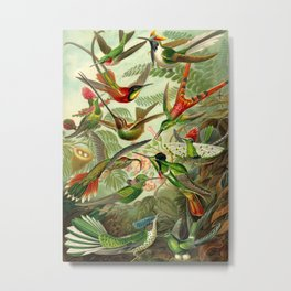 Ernst Haeckel Trochilidae 1904 Poster Metal Print