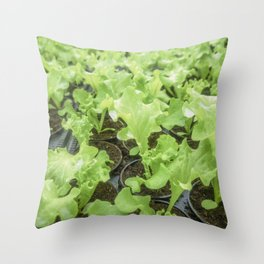 Lettuce Hydroponic farm, Lettuce Sprouts, Green Young Lettuce Plants Throw Pillow