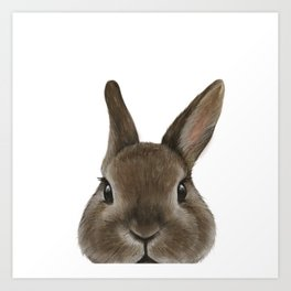 Netherland Dwarf rabbit illustration original painting print Art Print