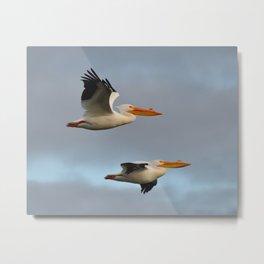 white pelican pair Metal Print