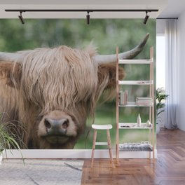 Scottish Highland Cattle with Forest in Background – Animal Photography Wall Mural
