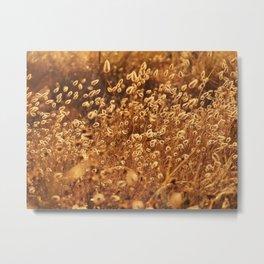 Golden bunny tails Metal Print