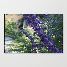 lavender by carolina b. marques :) Canvas Print