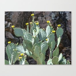 """Prickly Pear Canyon"" by Murray Bolesta Canvas Print"