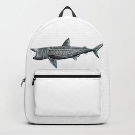 Basking shark (Cetorhinus maximus) Backpack