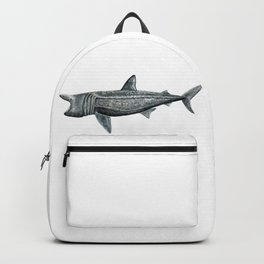 Basking shark (Cetorhinus maximus) Backpack