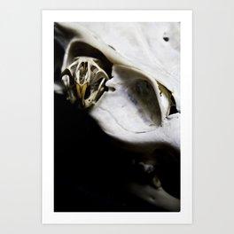 Skull 17 Art Print