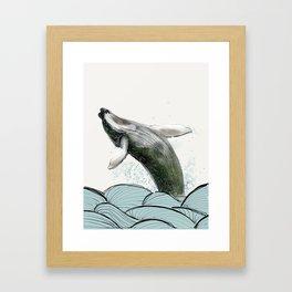 Breaching Whale  Framed Art Print