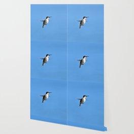 Juvenile Ruby-Throated Hummingbird Wallpaper