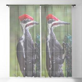 Pileated Woodpecker Sheer Curtain