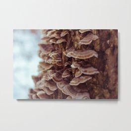 Tree Mushrooms Metal Print