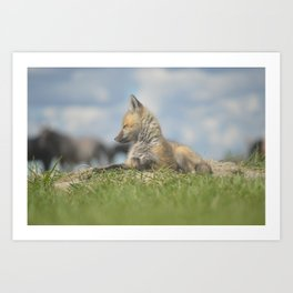 Fox pup Art Print