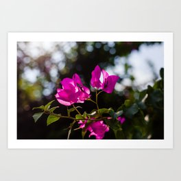 Blooming tree Art Print