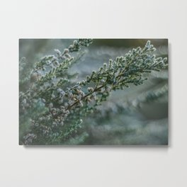 Frosted Heather Metal Print