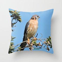 American Kestrel on Watch in La Verne Throw Pillow