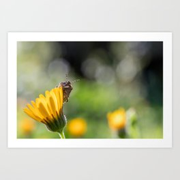 Funny insect on yellow flower Art Print
