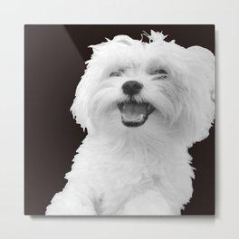 Elise dog Metal Print