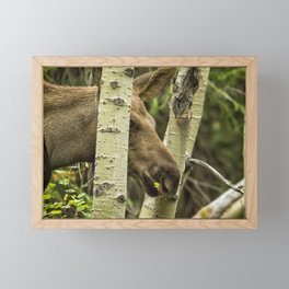 Hiding in Plain Sight - Moose Calf Framed Mini Art Print