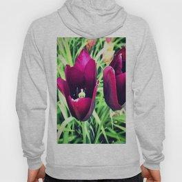 Purple Tulips in Bloom Hoody