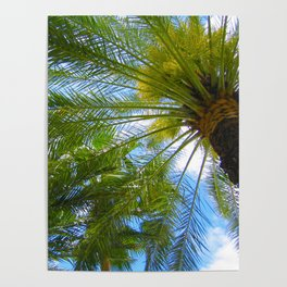Dreamy Palms of Hawaii Poster