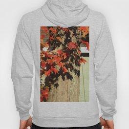 Bright Leaves, Deep Shadows Hoody