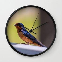 Shiny Swallow Wall Clock