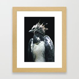 Harpy Eagle Framed Art Print