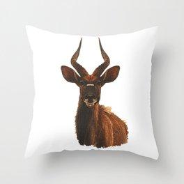 Bongo Antelope, antelope, African animals Throw Pillow