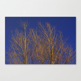 Glimmering Golden Willow Canvas Print