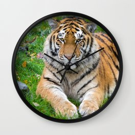 Marvelous Magnificent Tiger Resting In Pasture Close Up UHD Wall Clock