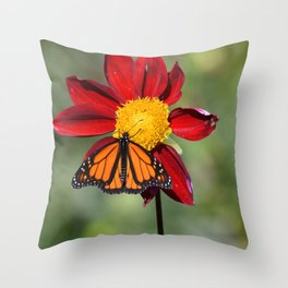 Monarch Butterfly on Red Flower Throw Pillow