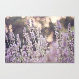 Smells like lavender Canvas Print