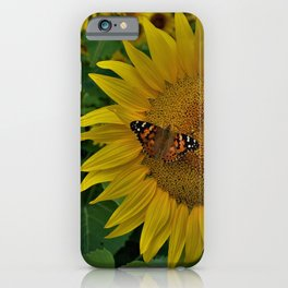 A Thirsty Butterfly iPhone Case