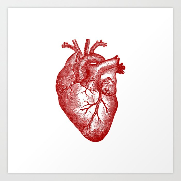 Vintage Heart Anatomy Art Print by stilleskyggerart | Society6