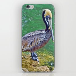 Pelican By The Pier iPhone Skin