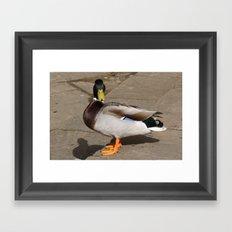 Duck with Attitude Framed Art Print