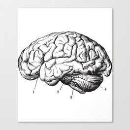 Human Brain Sideview Anatomy Detailed Illustration Canvas Print