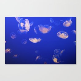 Jelly Gang Canvas Print